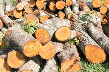 Stack of Cedar Timbers, Felling of Trees