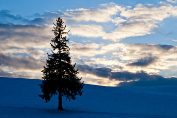 夕暮れの丘に立つ木