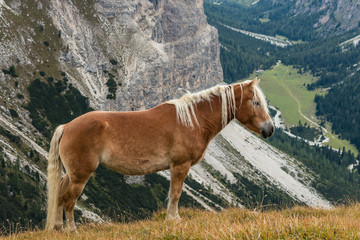 horse standing above valley in Dolomites