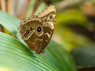 Butterfly on a Leaf in a Garden