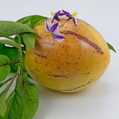 Pepino - Solanum muricatum