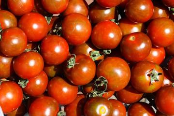 Tomaten-rot