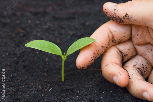 hand tenderly touching a young green plant / growing tree
