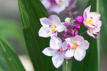 white and pink ground orchid