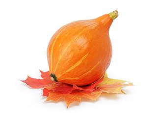 halloween pumpkin with leaves