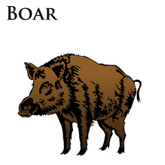 colored boar vector illustration