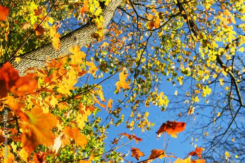 canvas print picture Laubfärbung im Herbst