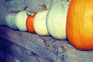 Pumpkins on wooden rustic shelf