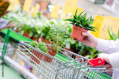 Man shopping in gardening department - 72244696