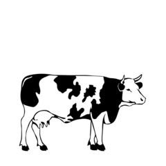 black and white cow vector illustrator