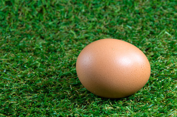 egg on grass background