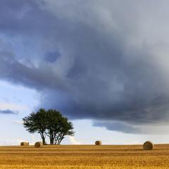 Field of hay, bales