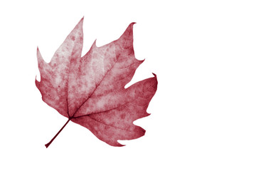 leaves isolated white background