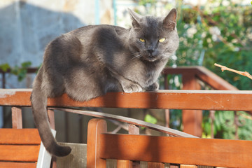 grey cat on bench