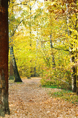 path in yellow forest in autumn