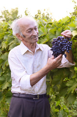 Senior happy farmer at vineyard