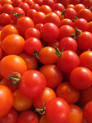 Ripe cherry tomatoes cultivated in the garden
