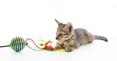 Cute tabby kitten toy play isolated