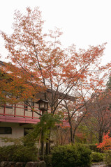 Tree with red leaves in the inn