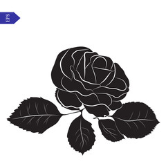 Flower and leaves of roses in black and white vector