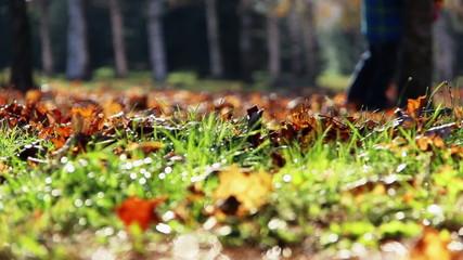 Fall foliage foot man sun
