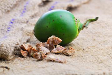 Betel nut fresh betel palm, Areca palm (Areca catechu Linn.)