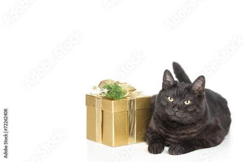 canvas print picture Katze und Weihnachten