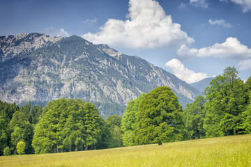 Alps with trees and grass