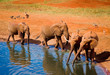 Elephants near water hole