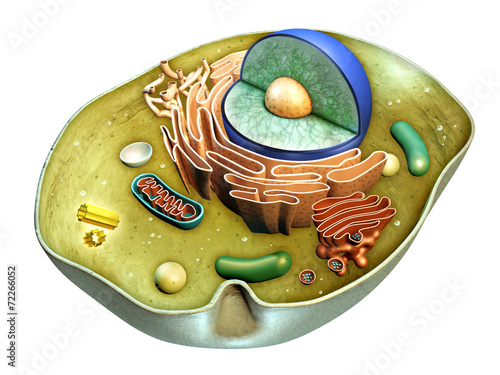 Cell structure - 72266052