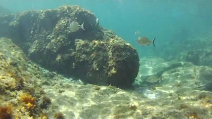 Méditerranée - plongée sous-marine
