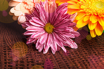 Three gerberas with water drops