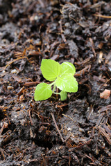 Green seedlings are growing on ground.