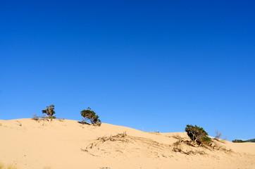 Sardegna, dune di Porto Pino
