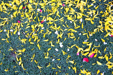 Green of ground lawn with flower petals campsites are.