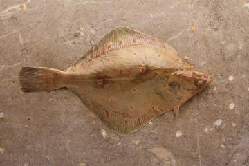 Lemon sole fish on marble background