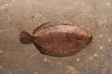 plaice fish on marble backgrouns