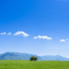 Albero su prato con sfondo di cielo azzurro e poche nuvole