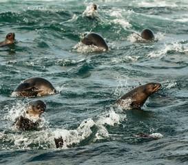 Jumping seals