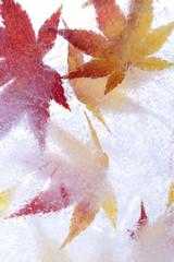 凍った落葉
