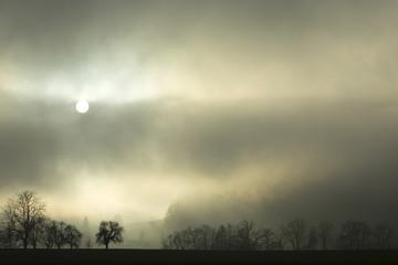 Nebel Landschaft mit Bäumen und Sonne im Hintergrund