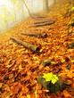 Steps in golden autumn forest, tourist footpath.