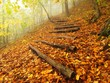 Wooden trunk steps in autumn forest, tourist footpath.