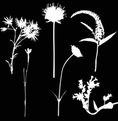 six white wild flowers on black illustration