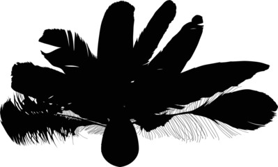 feather black fan silhouette on white