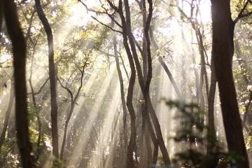 朝日が降り注ぐ森