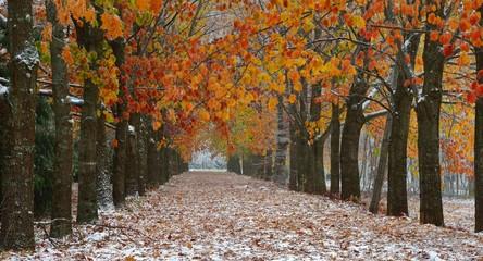 Autumn vista