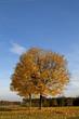 canvas print picture - HerbstLeuchten