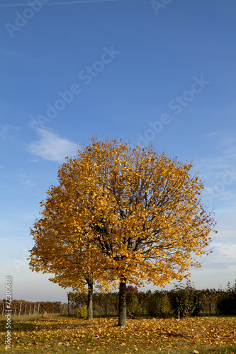 canvas print picture HerbstLeuchten