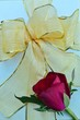 canvas print picture - Red Rose and Golden Ribbon